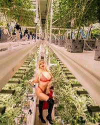 Tana Mongeau boobs showing nice cleavage with her tits and sexy ass in hot lingerie matching bra and thong panties in a photoshoot at a weed grow op.